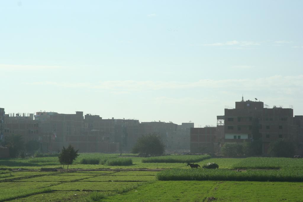 nile farmland