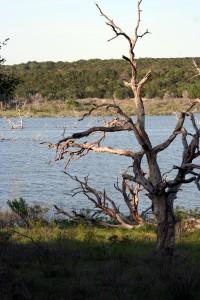 camping_4.12_tree on lake