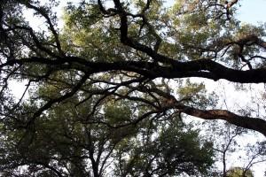 camping_4.12_tree tops